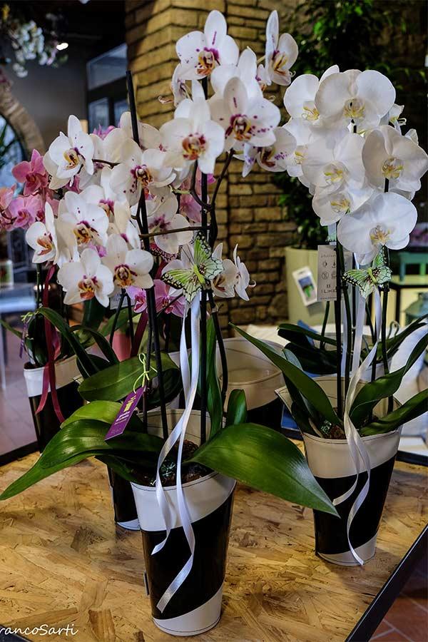 dscf7073-orchidee-web