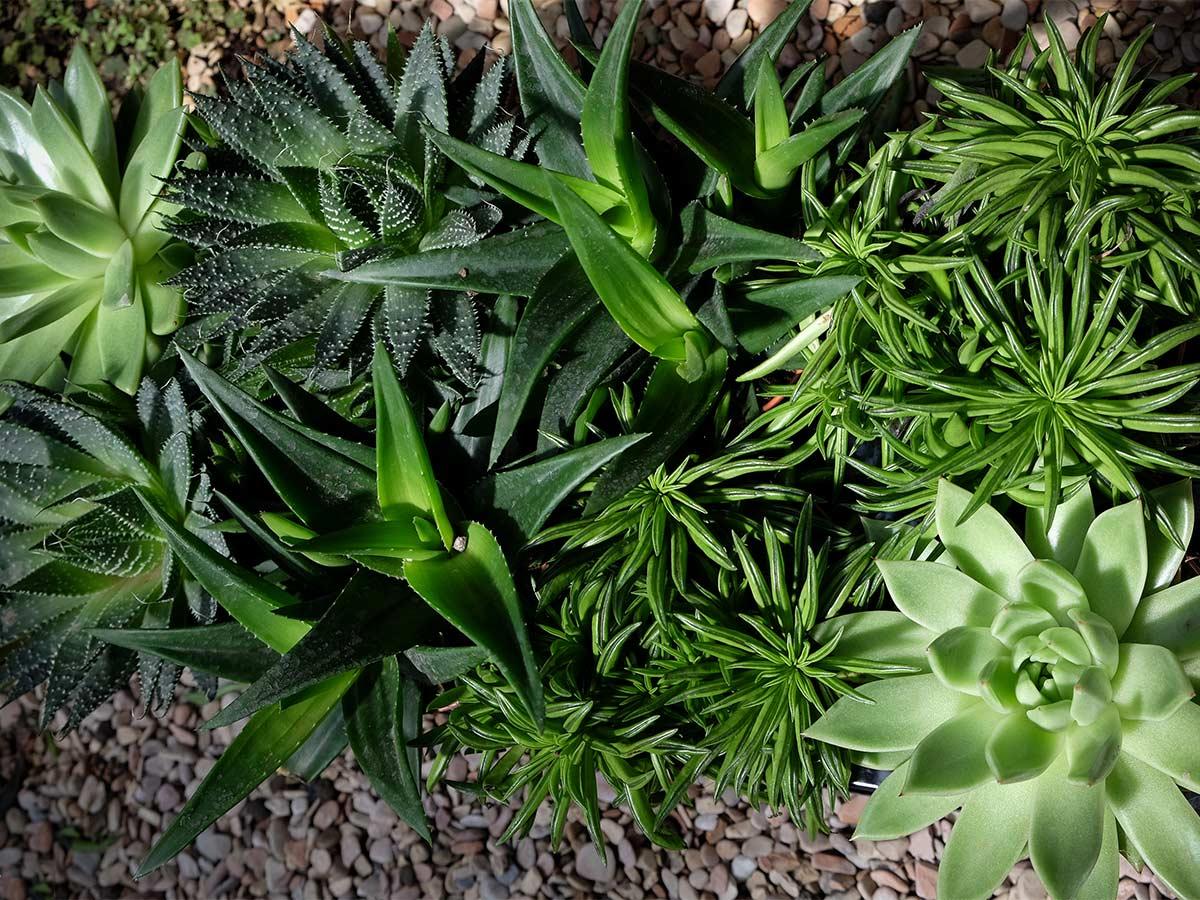 dscf7228-piante-grasse-web1