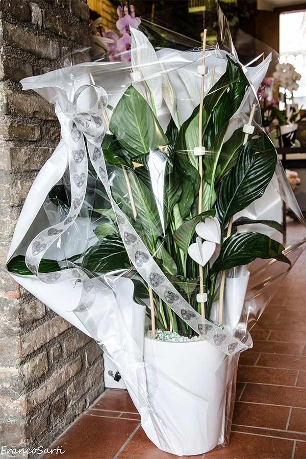 dsc_2968_anturium_orchidee_web