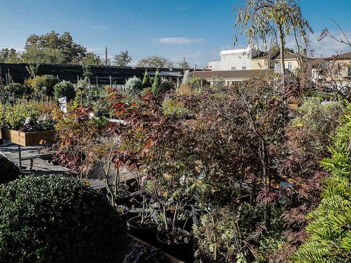 _dsf8330_piante_verdi_da_giardino_web