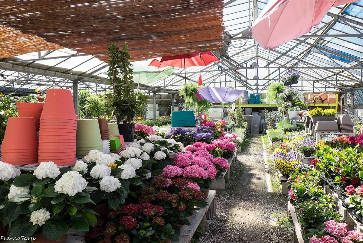 giardinaggio-piante-da-esterni-2