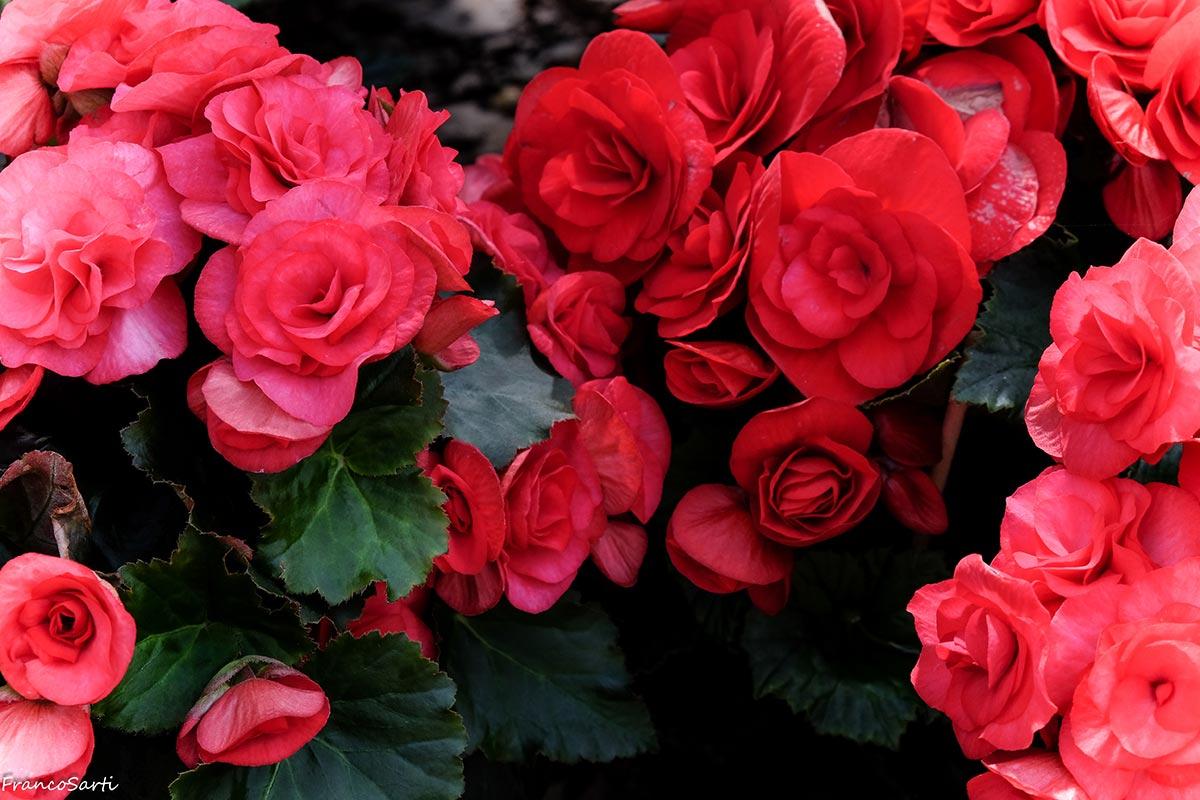 Consegne a domicilio <br/> di piante e fiori